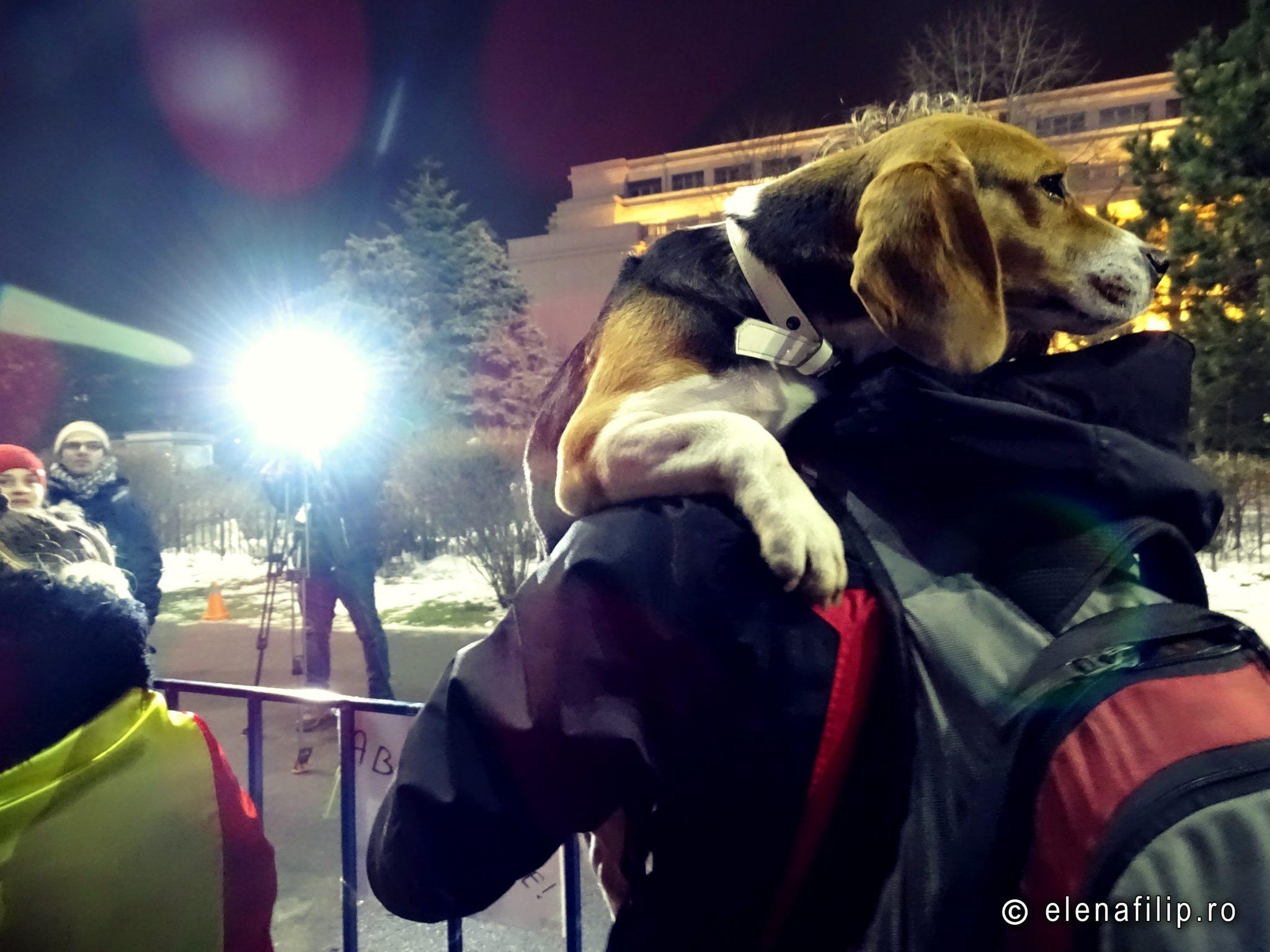 proteste romania bucuresti