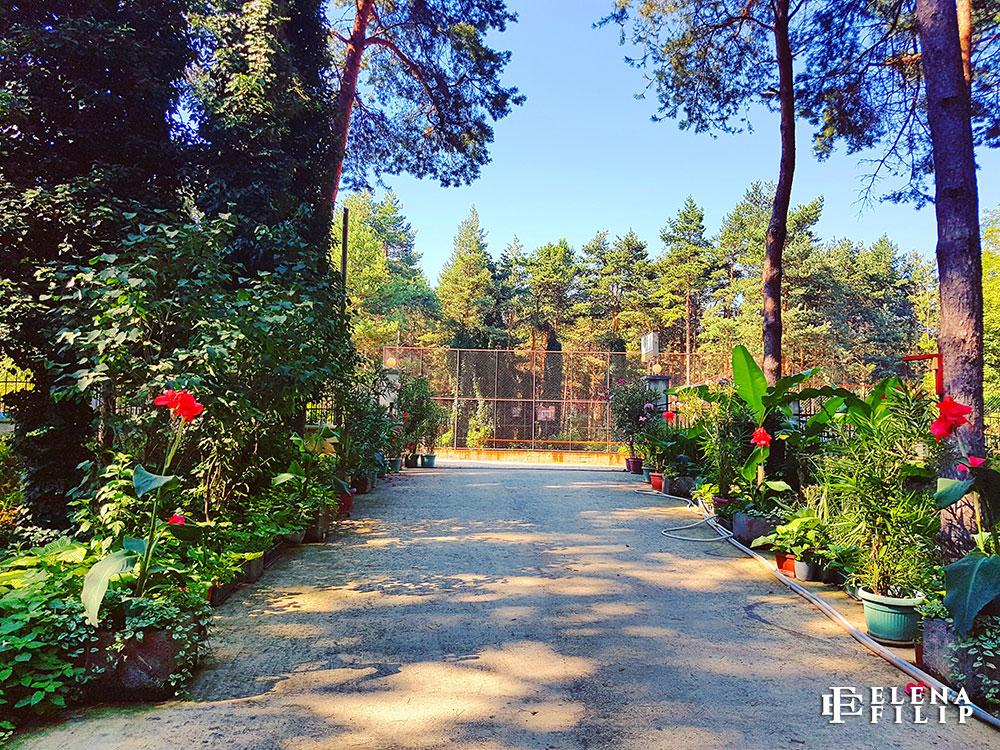 intrare pensiune dunavski raj